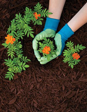 Mulch Colorant Safety PDF
